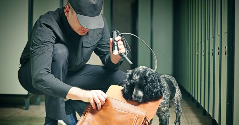 Agent des douanes avec son chien pour une vérification de bagage