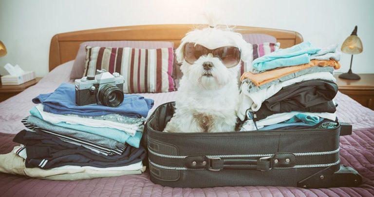 Chien dans une valise prêt à voyager