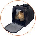 Chat dans son sac de transport - French Radar