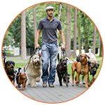 Pet-sitter dans la rue avec ses chiens - French Radar