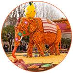 Un char en forme d'éléphant fabriqué à partir d'oranges et de citrons