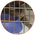 Chat dans une cage en quarantaine