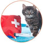 Chat sur une serviette bleue avec une trousse de secours