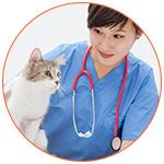 Chat en visite chez le vétérinaire