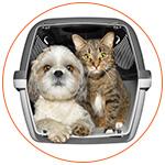 Chien et chat dans une cage de transport prêt pour le voyage