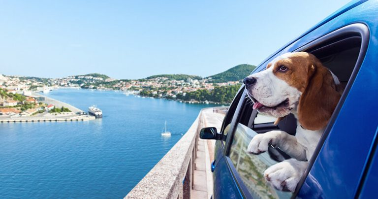 Chien à la fenêtre de la voiture admirant le paysage