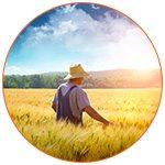Fermier dans champs de blés