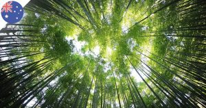 L'Australie prévoit de planter un milliard de nouveaux arbres