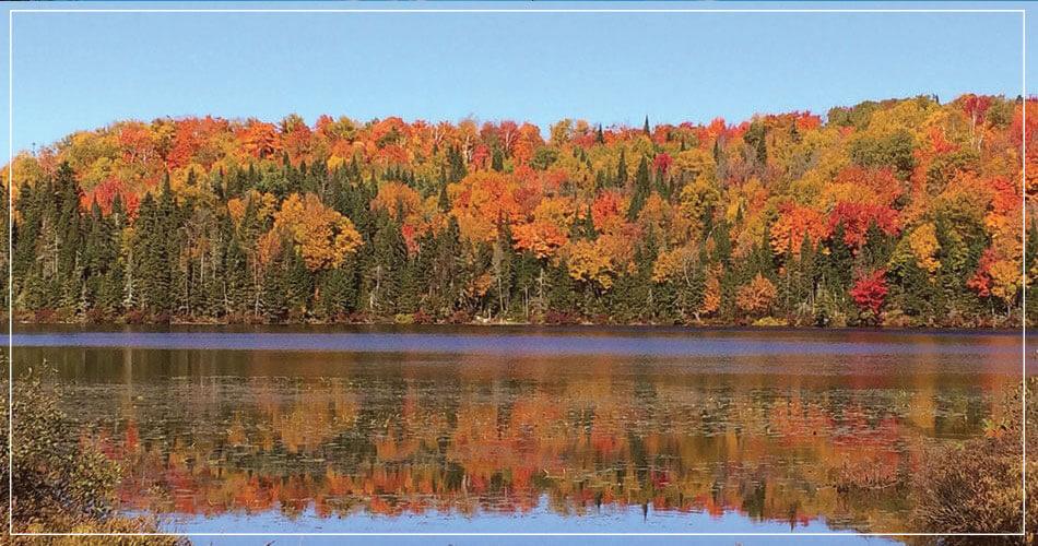 Magnifique couleurs d'une forêt canadienne