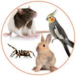 Groupe de NAC : Rat, Oiseau, Araignée, Lapin