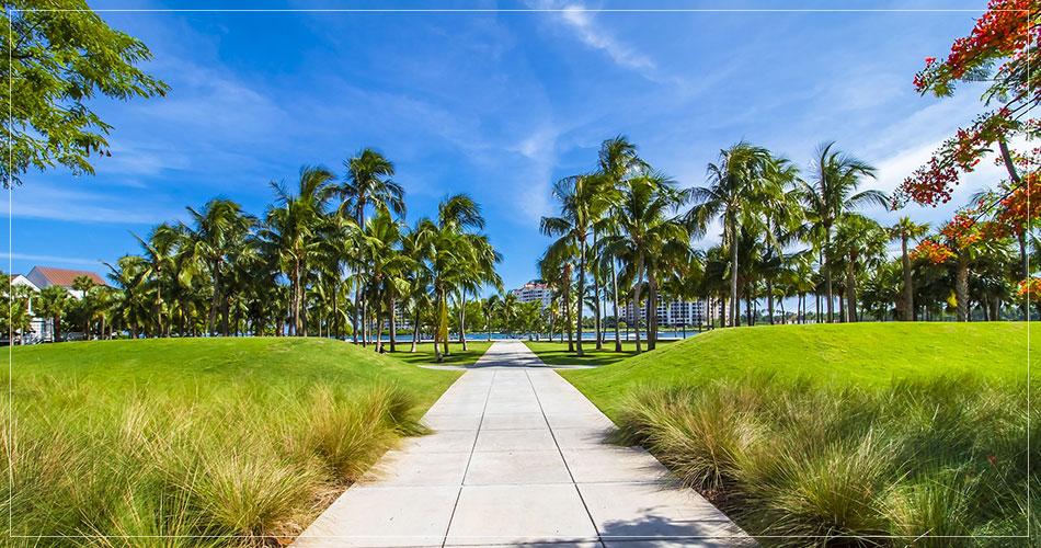 Photo de la végétation luxuriante à Miami (USA)