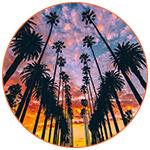 Palmiers de Los Angeles (USA)