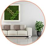 Des plantes d'intérieur dans le salon