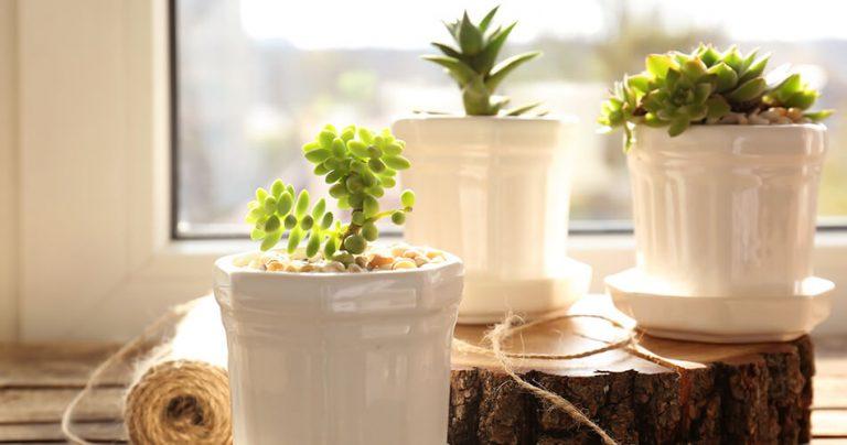 Plantes dépolluantes dans des pots blancs au bord de la fenêtre
