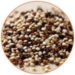 Photo gros plan sur des grains de Quinoa