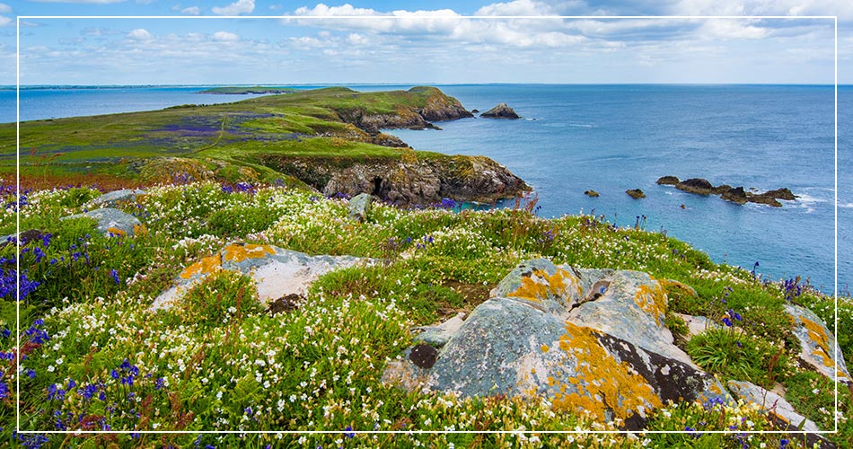 Péninsule florale sur l'Île Saltee Great en Irlande