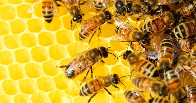 Groupe d'abeilles dans une ruche