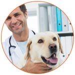Vétérinaire avec un labrador devant une armoire de dossiers