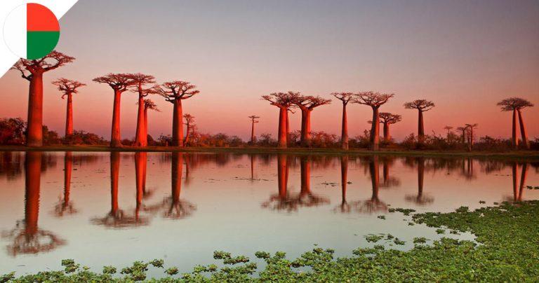 Avenue des Baobabs à Madagascar