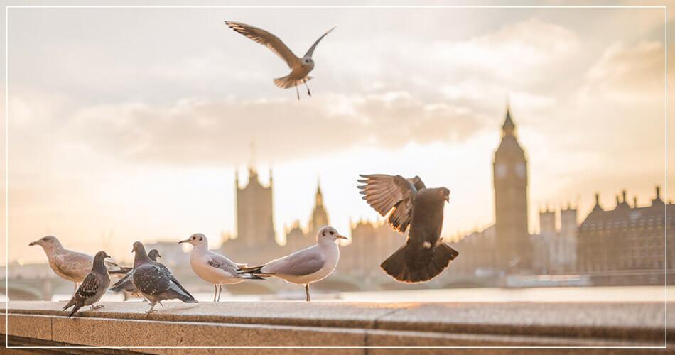 Paysage de Londres avec vue sur Big Ben