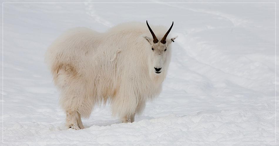 Vie sauvage dans le Yukon au Canada